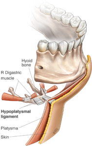 neck lift anatomy
